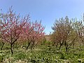Garden باغ - panoramio.jpg