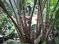 Gardenology-IMG 8003 hunt10aug.jpg