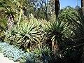 Gardenology.org-IMG 0302 hunt07mar.jpg
