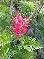 Gardenology.org-IMG 2090 hunt09oct.jpg