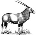 Gemsbok (PSF).png
