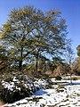 Georgia snow IMG 5495 (38969114301).jpg