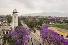 Ghantaghar and Jacaranda.jpg