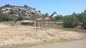 Reserve Africaine De Sigean Wikipedia