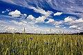 Gmina Narew, Poland - panoramio (104).jpg