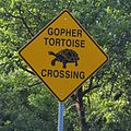 Gopher Tortoise Crossing - Road Sign.JPG