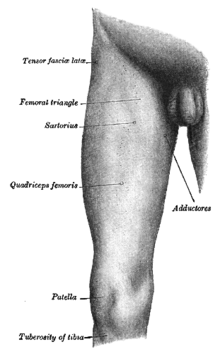 Сгибание разгибание колленого сустава викт рецепт лавровый лист от соли в суставах