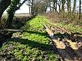 Green Lane - geograph.org.uk - 352681.jpg