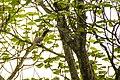 Grey Hornbill (20460866071).jpg