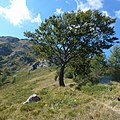 Grigna, Esino Lario, Lecco, Italy - panoramio (10).jpg