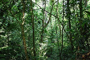 Jungle around Group C in Palenque, Chiapas, Mexico