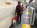 Guide dog - in Asakusa stn platform Jan 25 2019 07-25-28 PM.jpeg
