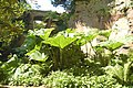 Gunnera leaves in the Quarry Garden at Belsay Hall - geograph.org.uk - 1384610.jpg