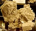 Gypse sur aragonite.jpg