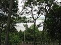 Hồ Lắk.JPG