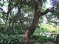 HK Kln Park forest trees Oct-2012.JPG