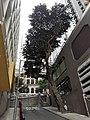 HK SW 上環 Sheung Wan 鴨巴甸街 Aberdeen Street morning Febtuary 2020 SS2 07.jpg