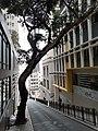 HK SW 上環 Sheung Wan 鴨巴甸街 Aberdeen Street morning Febtuary 2020 SS2 08.jpg