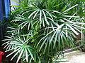 HK Sheung Wan 6 Po Hing Fong green tree Aug-2012.JPG