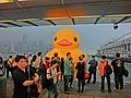 HK TST evening 121 yellow Rubber Duck visitors May 2013.JPG