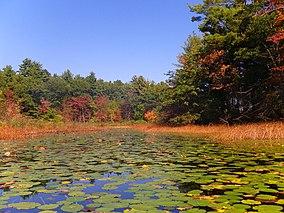 Hampton Ponds State Park.jpg