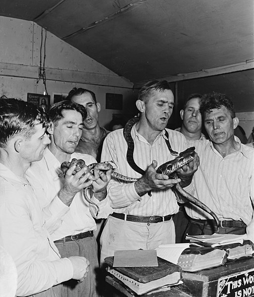 File:Handling of serpents, a part of the ceremony at the Pentecostal Church of God. This coal camp offers none of the... - NARA - 541340.jpg