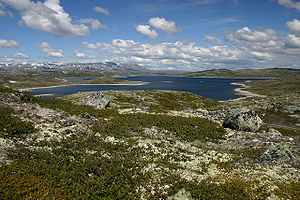 Sub-Cambrian peneplain - Much of the Hardangervidda plateau in the Norway is believed to be an uplifted part of the peneplain