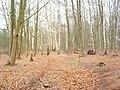 Hardwood Trees - geograph.org.uk - 353703.jpg