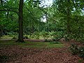 Harlow Carr - deciduous woodland - geograph.org.uk - 224446.jpg