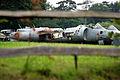 Harriers (859695055).jpg