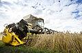 Harvest, Minnesberg, Skane, Sweden 20140816 0061 (20713655505).jpg