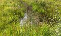Heidevennetje. Locatie, Stuttebosch in de lendevallei. Provincie Friesland 02.jpg