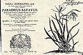 Hermann Paradisus Batavus.jpg