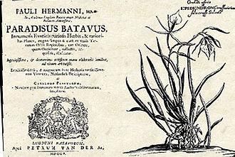 Pieter van der Aa - Image: Hermann Paradisus Batavus