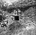 Hlev v Bržanih, gnoj kidajo skozi okno 1950.jpg