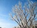 Hoarfrost 2012 4 (6968913117).jpg