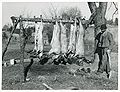 Hog killing Halifax County Marion Post Wolcott 1939.jpeg
