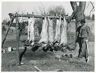 Halifax County, Virginia - Hog Killing on Milton Puryear Place, Dennison, Halifax County, Marion Post Wolcott, 1939