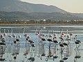 Holidays Greece - panoramio (395).jpg