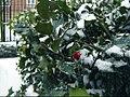 Holly in Winter.jpg