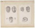 Homo sapiens - 1700-1880 - Print - Iconographia Zoologica - Special Collections University of Amsterdam - UBA01 IZ19600095.tif