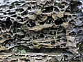 Honeycomb weathering (Black Hand Sandstone, Lower Mississippian; Picnic Rock, Black Hand Gorge, Ohio, USA) 3.jpg