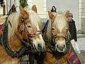 Horses in Brixen.jpg