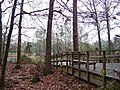 Houston Arboretum and Nature Center - panoramio - Idawriter (2).jpg