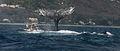 Humpback whale 2009-11-25.jpg