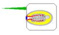 Hydra nematocyst 01.png