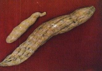 Chayote - Ichintal (chayote root)