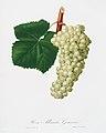 Illustration from Pomona Italiana Giorgio Gallesio by rawpixel00046.jpg