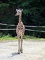 Im Duisburger Zoo - panoramio.jpg