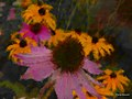 Impression Flowers (242844143).jpeg